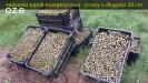 PLANTACJA TOPOLI (wierzby) - analiza gleby, NASADZENIE mechaniczne, pielęgnacja